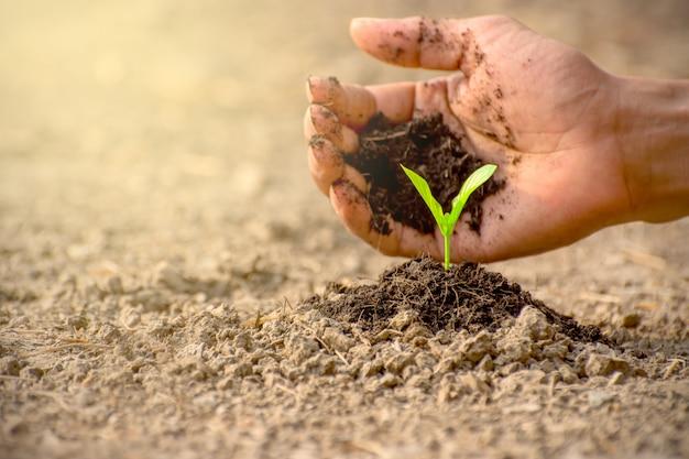 男性の手が苗木を土に植えています。