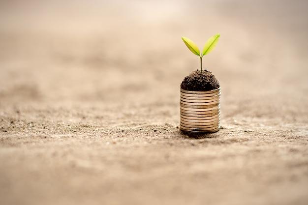 苗は地面に置かれたコインで成長しています。