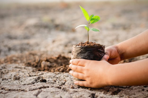 Рука ребенка сажает дерево ใ