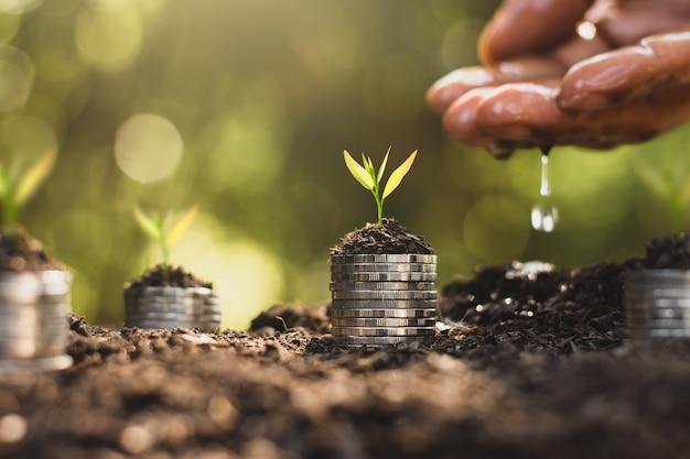 Саженцы растут на сложенных на земле монетах, а руки людей поливают.