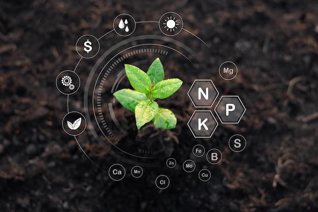 苗木は肥沃な土壌、環境の概念から成長しています。