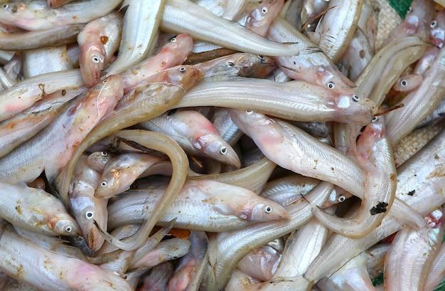 Маленькая рыба в продаже на рынке таиланда