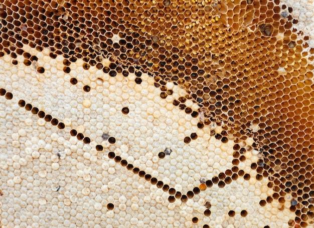 ミツバチとハチミツ