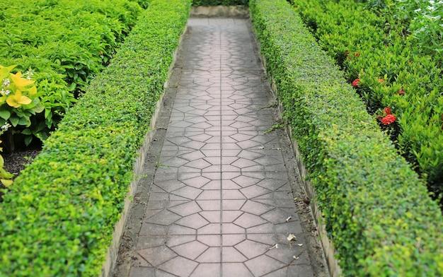 緑の葉の間の公園の散歩道壁フェンスの背景。