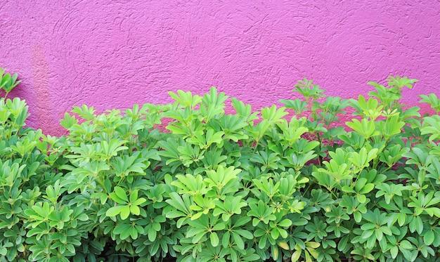 小さな装飾の木と荒い深いピンクの壁。