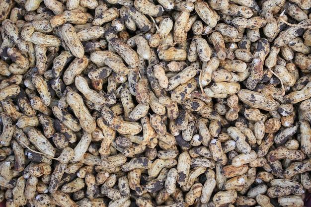 テクスチャの背景のための土壌とシェルの新鮮なピーナッツ。