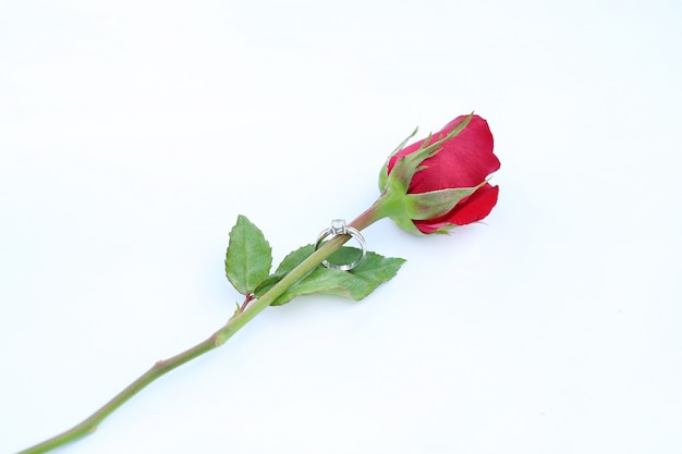 Цветок красных роз с обручальным кольцом на белом фоне