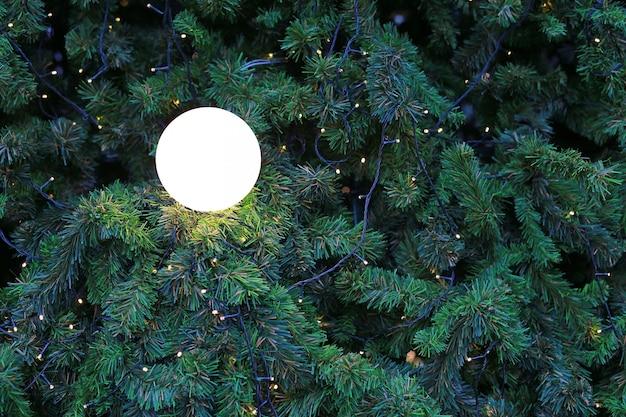 クリスマスの背景のための光とクリスマスの松の木。