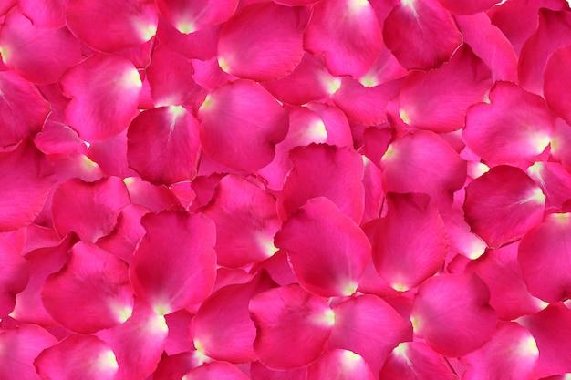 背景のピンクのバラの花びらを閉じます。