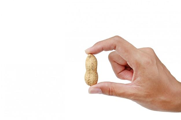 白い背景で隔離のシェルでピーナッツを持っている手