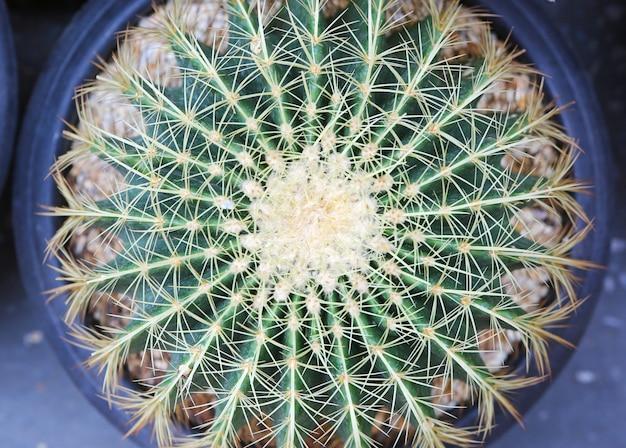 Вид сверху кактус в горшке в саду.