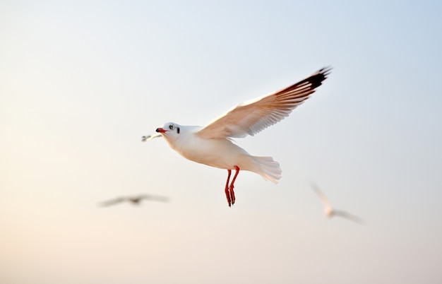 Чайки летая в небо на заходе солнца.
