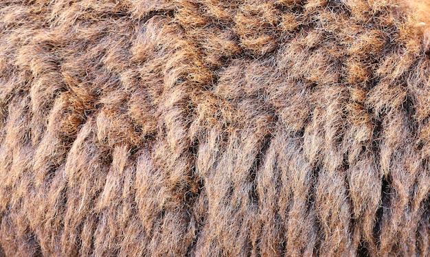 シープスキンの背景、背景のウールの羊のクローズアップ