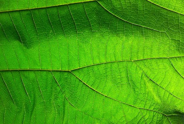 抽象的な緑の葉のテクスチャの背景