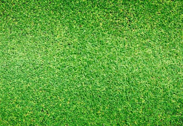 草背景ゴルフコース緑の芝生