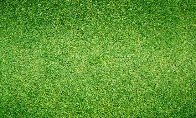 草背景ゴルフ場緑の芝生