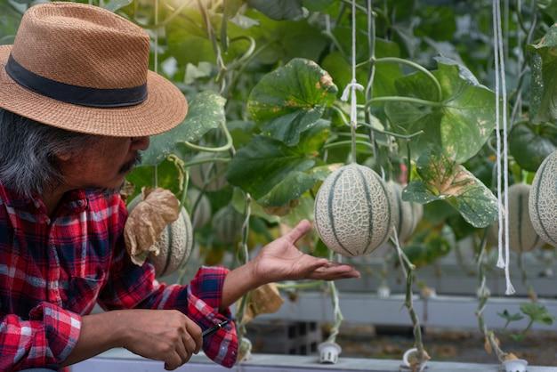 現代の水耕農業における植物の品質をチェックするアジアの農家