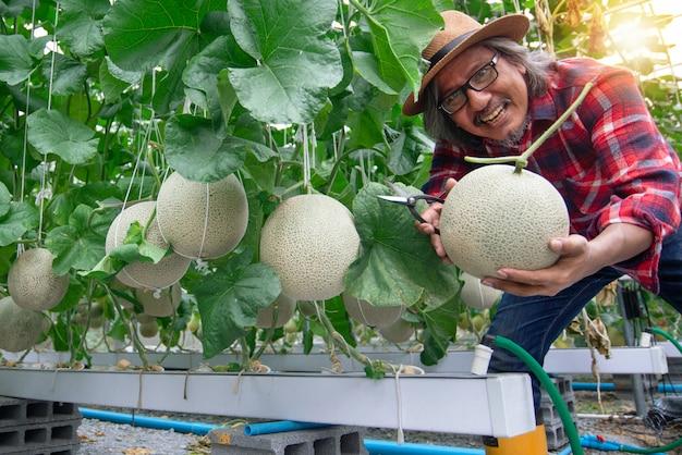 誇り高い顔を持つメロン農家は、温室、現代の水耕栽培で彼の収穫を提示します