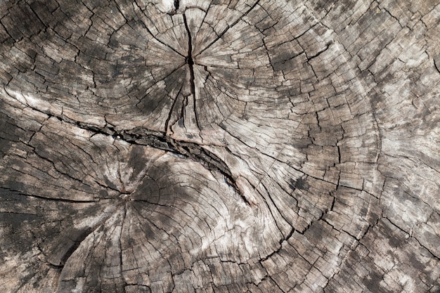 木の樹皮のテクスチャーの断面