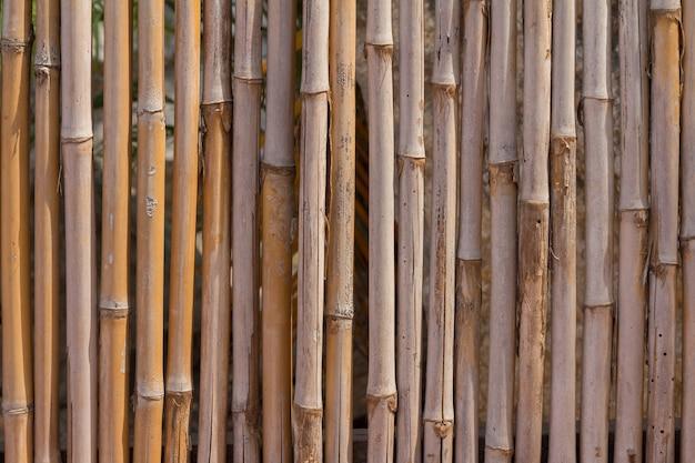 Бамбуковая текстура фон