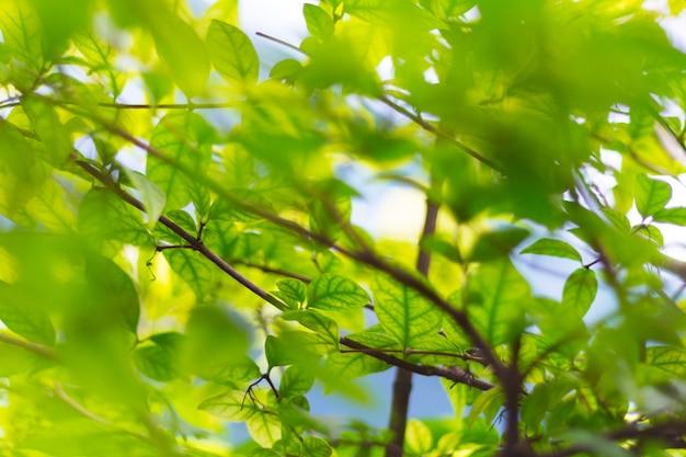 色と明るい日光の下で自然のぼやけた緑