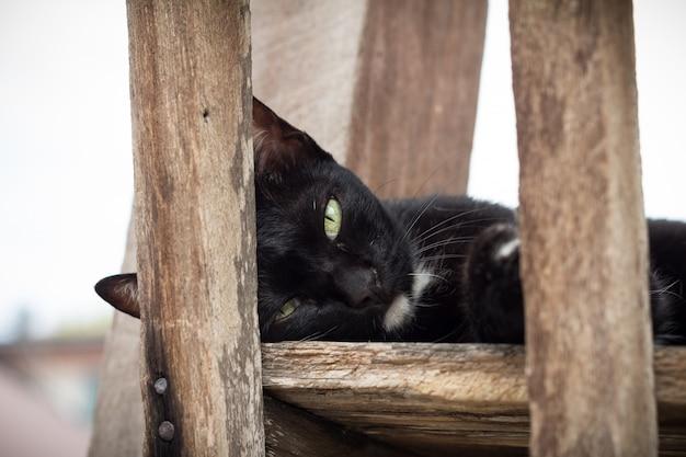 かわいい黒猫が見上げる