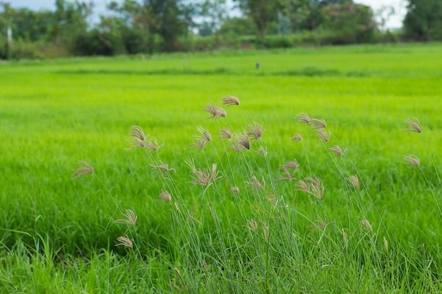 Полевые цветы на поле