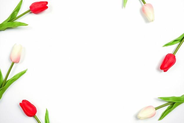 白い背景、花に美しい春のチューリップ