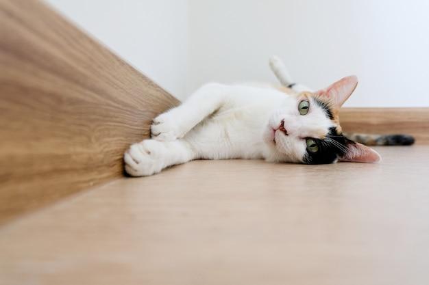 Ситцевый кот перевернулся и лег на землю, глядя в камеру.
