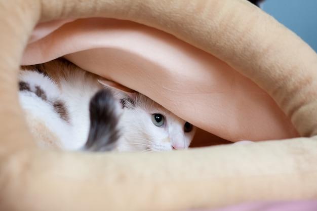 猫は恐怖で大きな布袋に隠れて隠れる。