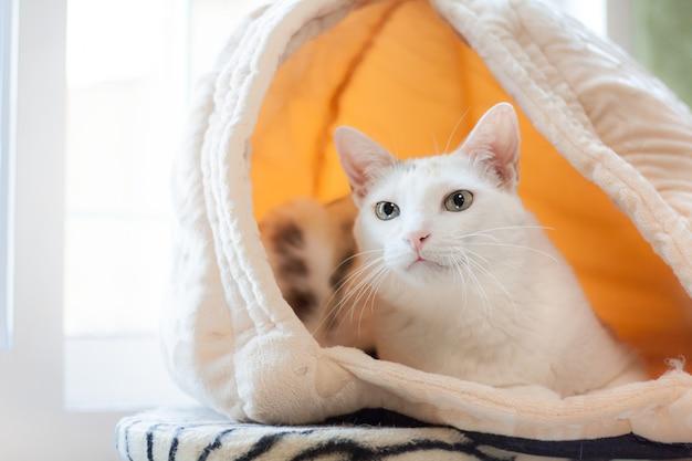 猫のベッドの洞窟で横になっている白猫。彼女は何かを探しています。