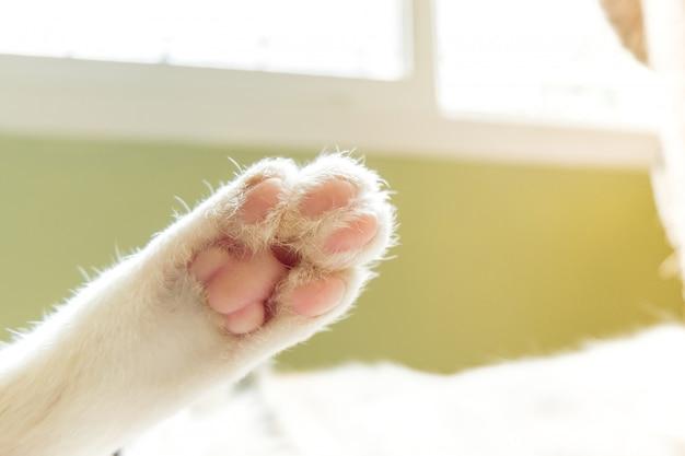 快適に眠っている猫の足。
