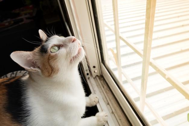 窓の外の何かを熱心に見ている猫。
