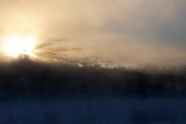 朝の湖と松林
