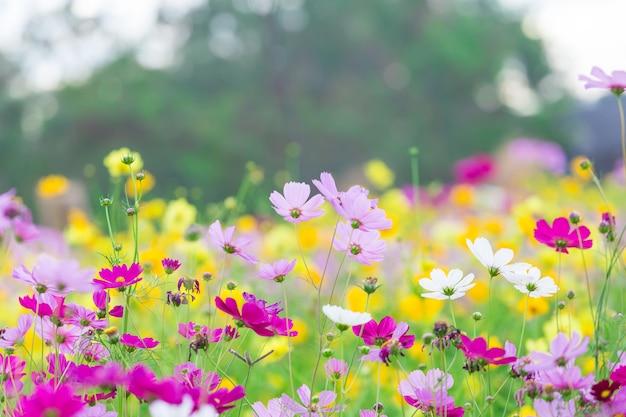 Космос цветочное поле