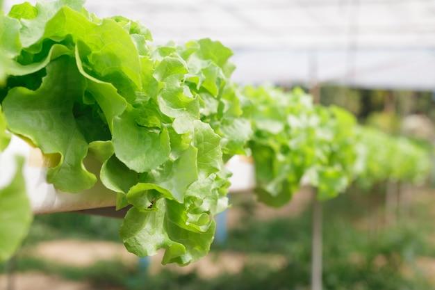 成長する植物の水耕栽培法