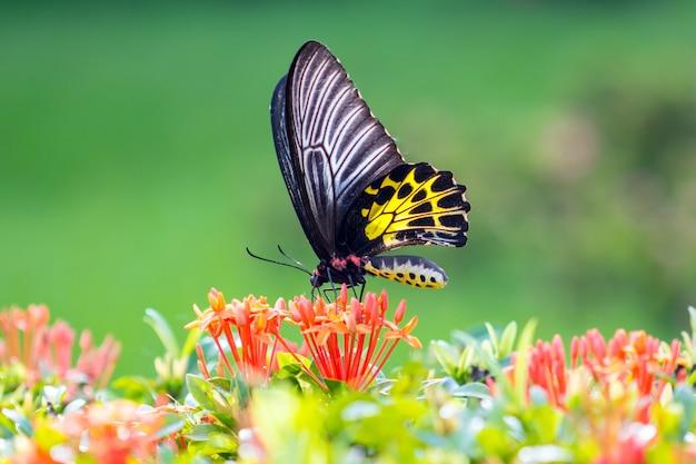 Бабочка летит в утренней природе.