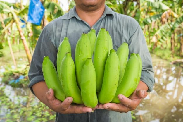 Фермер держит бананы в своем банановом саду