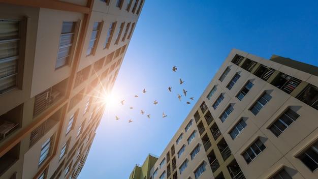 Современное здание кондоминиума с солнечным светом