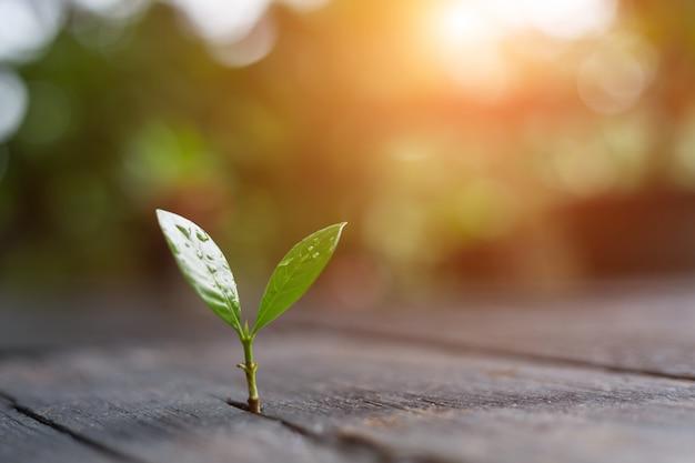 緑の自然の背景のボケ味を持つ朝の光で成長している若い植物