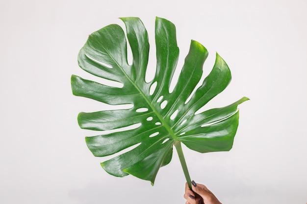 緑の葉を持つ女性。白い背景に分離されました。