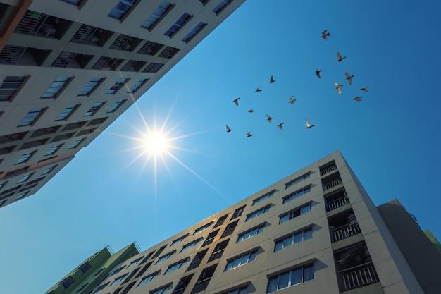 日光を浴びる近代的なマンション