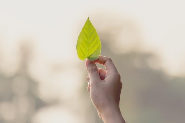 Женская рука держит лист