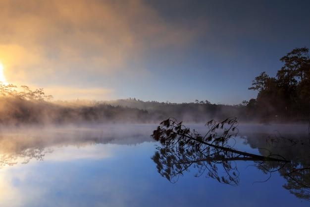 チェンマイ、タイでの朝の時間に湖と松の森