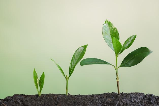 ビジネスが成長し、若い植物が成長する