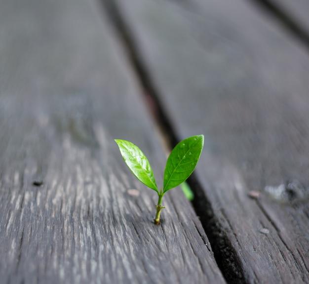 緑の自然と朝の光で成長している若い植物