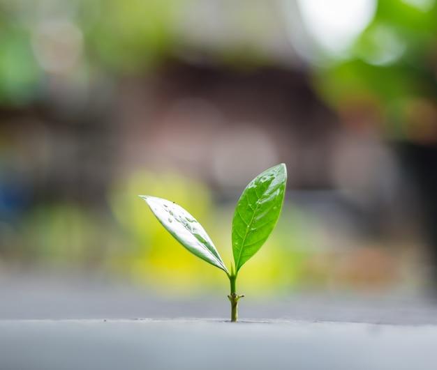 背景の緑の自然のボケ味を持つ朝の光で成長している若い植物。新しい生活成長エコロジービジネス金融概念。