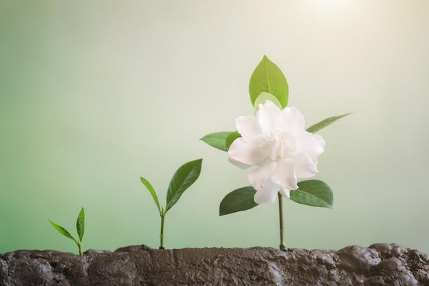 成長するビジネス、若い植物の成長