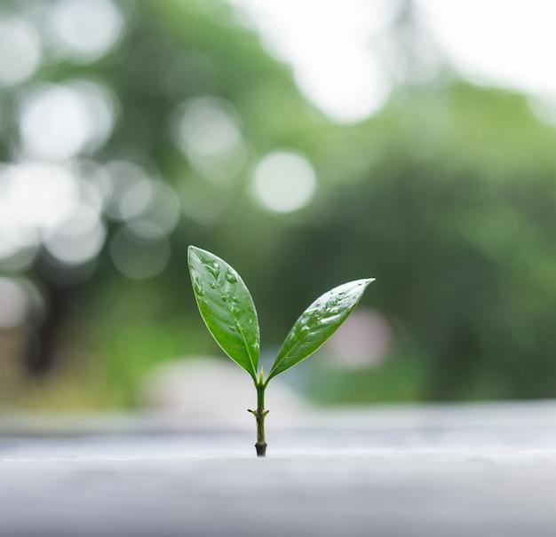 背景の緑の自然のボケ味を持つ朝の光で成長している若い植物