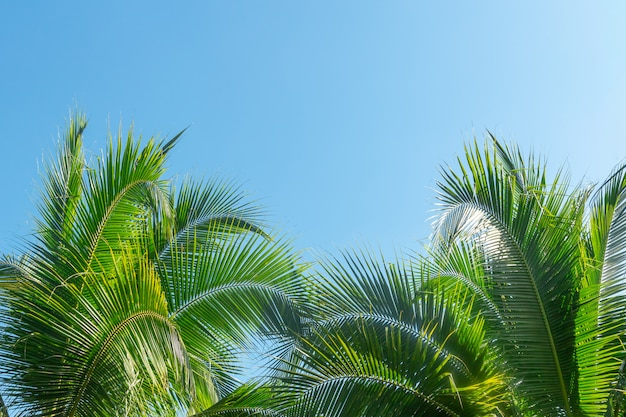 Кокосовая пальма в голубом небе